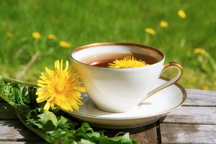 Pissenlit : une plante aux multiples propriétés médicinales